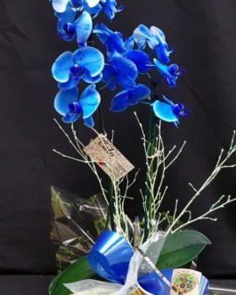 Orquidea Blue