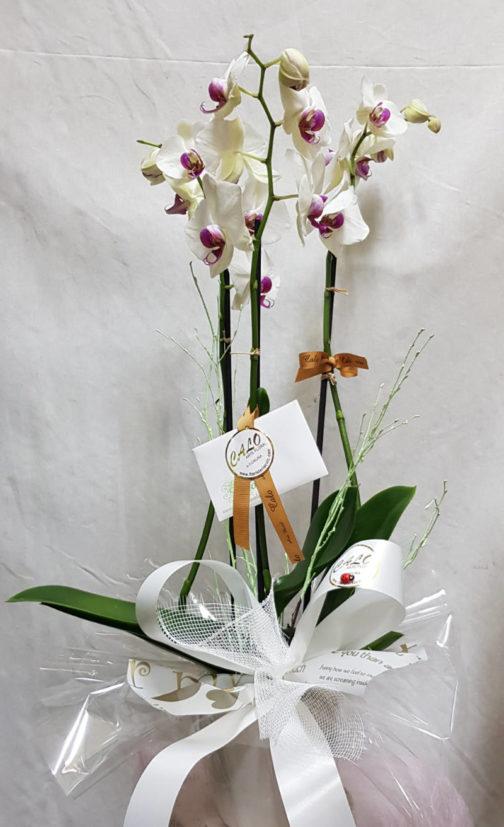 Orquidea con macetero