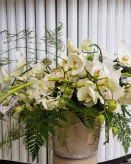 Centro orquídeas y algo mas