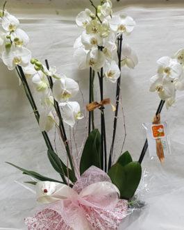 Composición orquídeas