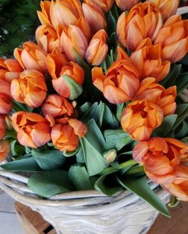 Macizo de Tulipanes