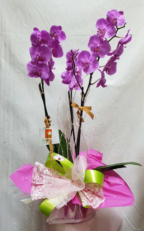 planta-orquidea-coruna