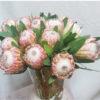 jarron proteas