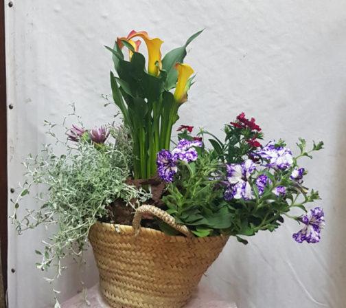 planta natural flor de temporada