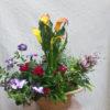 planta natural flor de temporada calo