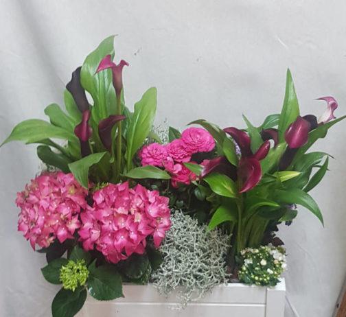 planta-natural-coruna-cristina