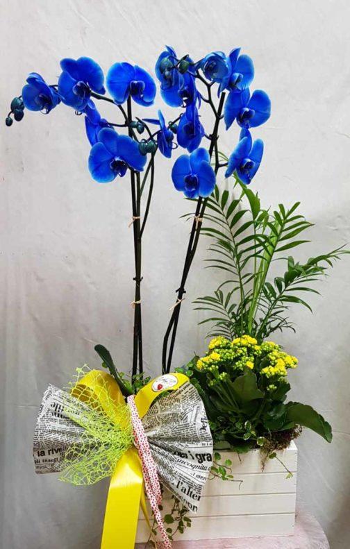 Magic blue -flor