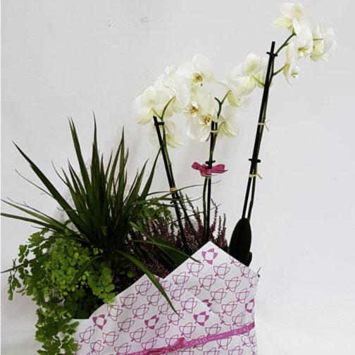 Planta Atenea